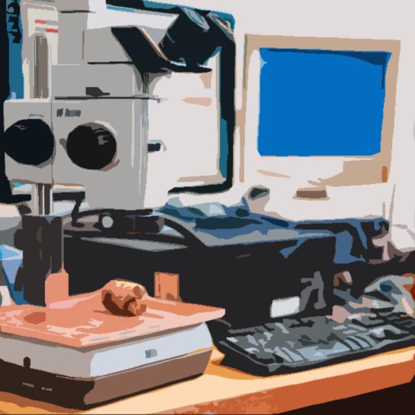 Job Opportunity – Junior Mineralogist